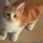 Churchills katt hette Jock.