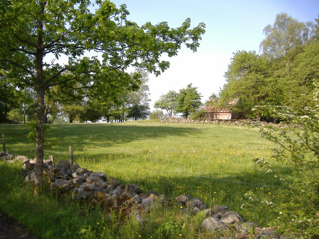 En äng utanför Onslunda. Foto: Anna Larsdotter